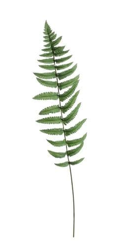 Large Ladder Fern Leaf (70cm)